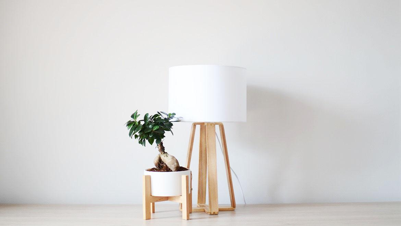 Consejos para decorar con plantas
