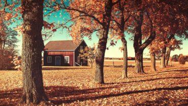Tendencias de decoración para el otoño