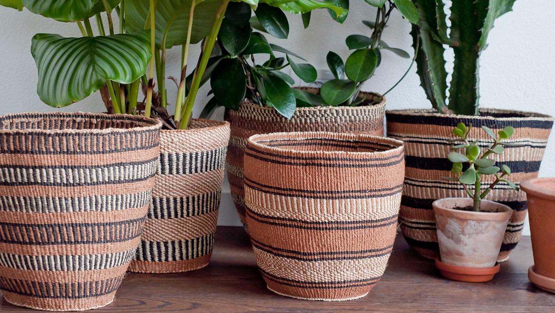plantas-en-cestas