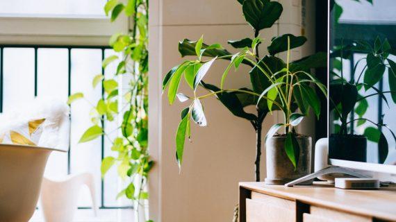 Decoración tropical: ¡deja que el color y el calor inunden tu hogar!