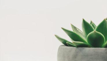 Plantas resistentes para decorar tu hogar