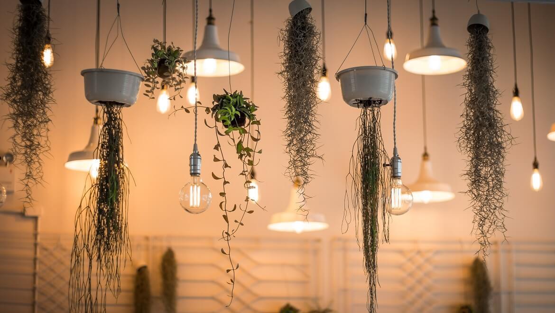 iluminacion-y-plantas
