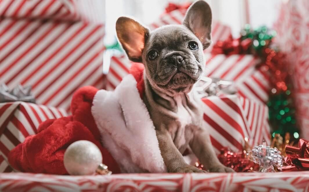 perro-decoracion-Navidad